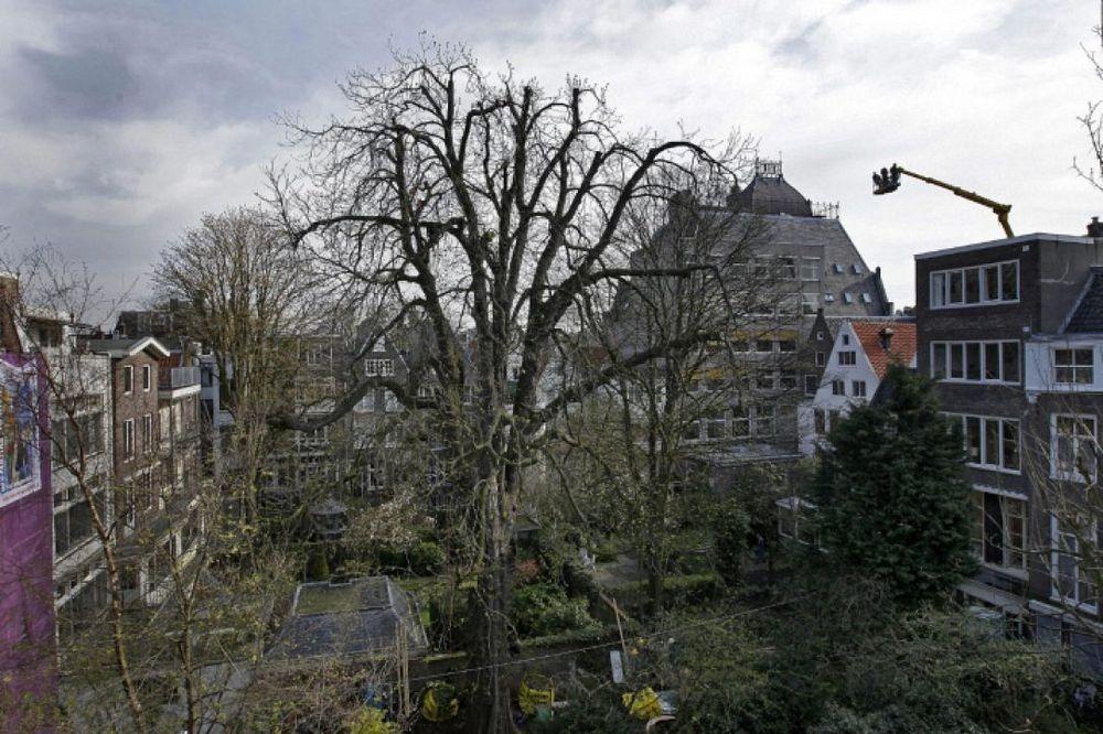 anne-frank-tree