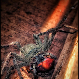 Spider by Rajesh Mondal - Instagram & Mobile Android ( mobilography )