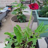 Gardening 2010 - 101_0362.JPG