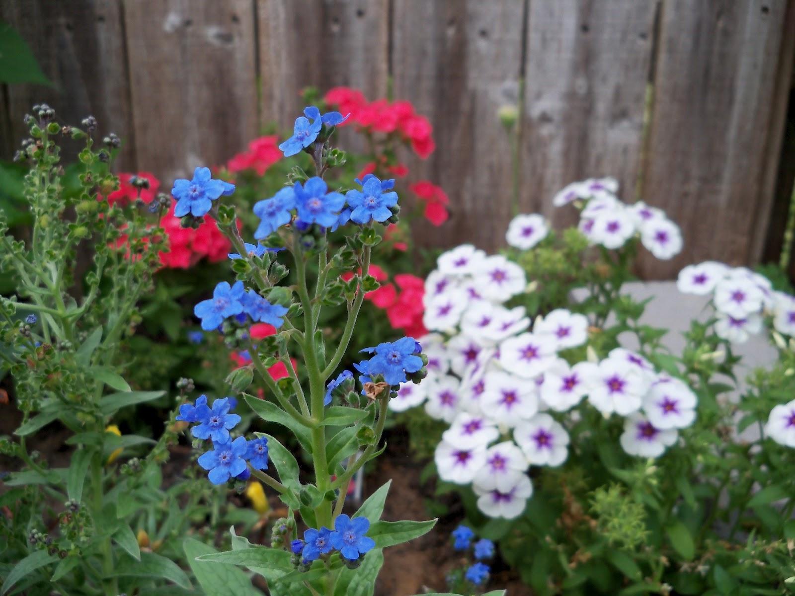Gardening 2011 - 100_8086.JPG