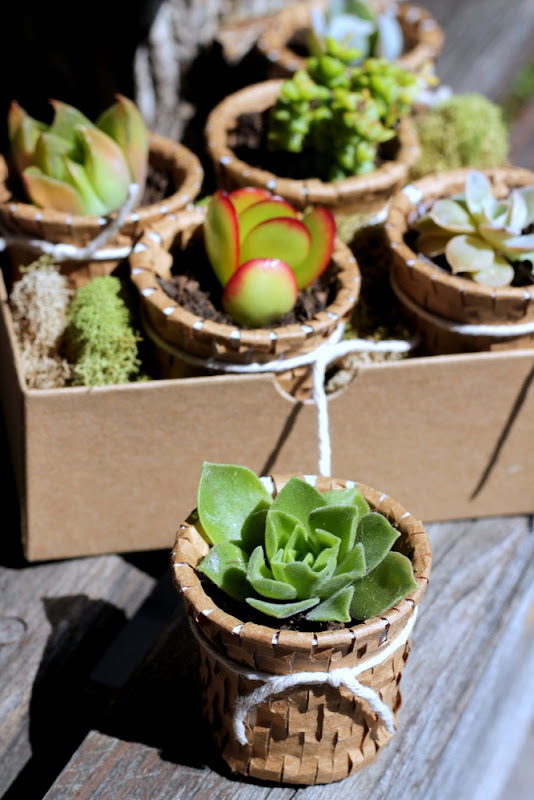Recycled K Cup Succulent Pots - homework (3)