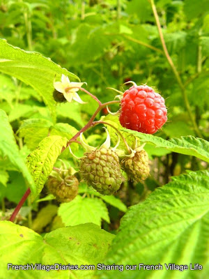 French Village Diaries Home grown fruit raspberries orchard