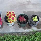 Gardening 2010, Part Three - 101_4908.JPG