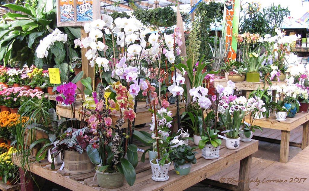 [05-08-orchids2%5B4%5D]