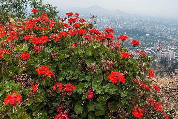 Santiago33.jpg