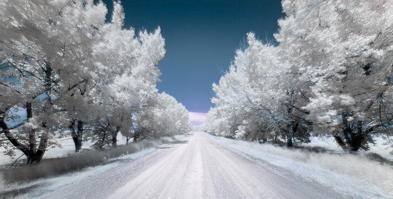 Snow - Patrick Latter