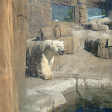 Pittsburgh Zoo Revisited - DSC05204.JPG