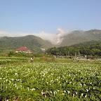 2010.04.09竹子湖海芋