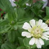 Gardening 2011 - 100_8067.JPG