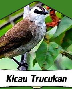 Suara Burung Trucukan +1000 Kicau - náhled