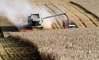Algérie: Un complexe de céréales en cours de réalisation à Aflou