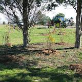 Hammo Planting - Shannon Schiesser - IMG_4957.JPG