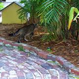 Key West Vacation - 116_5415.JPG