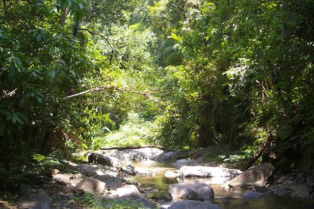 La forêt près des chutes de Pamoayan. Biotope de Papilio (Menelaides) memnon lowii DRUCE, 1873, et de Lyssa zampa BUTLER, 1869 (très abondant). Palawan, 17 août 2005. Photo : J.-M. Gayman