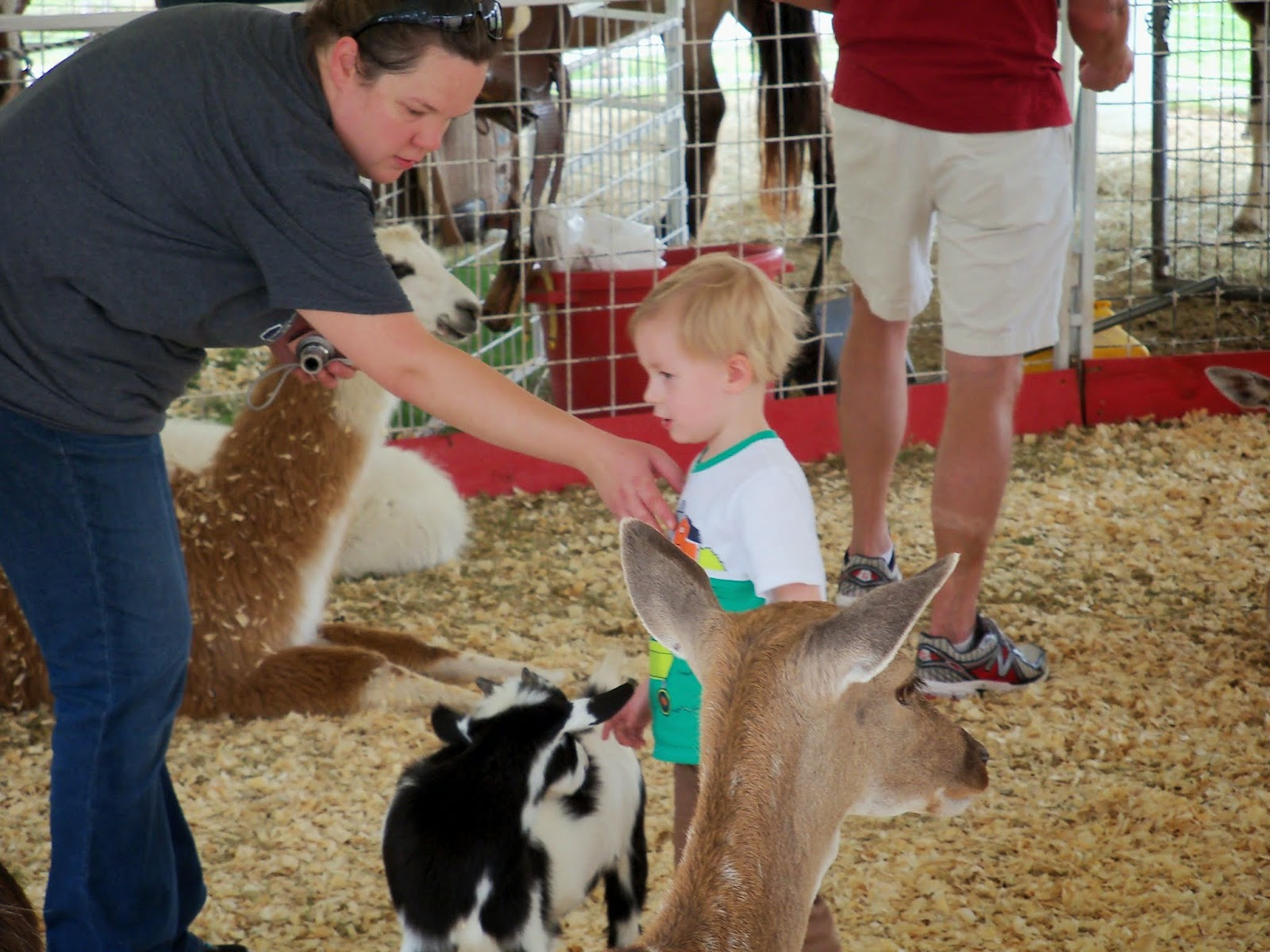 Fort Bend County Fair 2014 - 116_4278.JPG