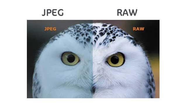 طائر غريب يوصف الفرق بين الصور jpeg و ال Rawالفرق بين الصور jpeg و ال Raw,jpeg,الفرق بين صيغة jpeg vs raw,raw vs jpeg,مقارنة بين صيغ التصوير,الفرق بين الراو و الجيبج,jpeg vs raw,الفرق بين ملفات