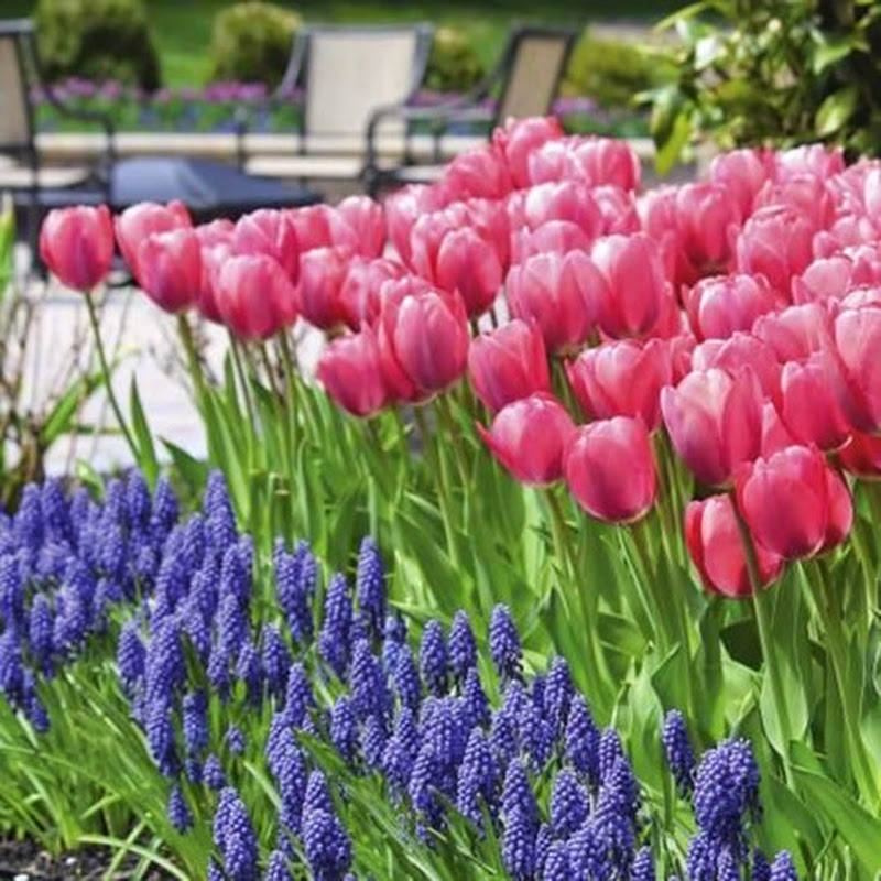 Fall Plantings for Spring Color