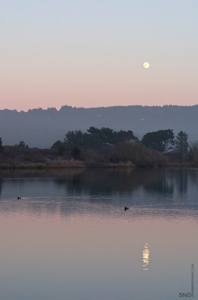 Moon, Belt of Venus, Dusk, Nightfall, Arcata Marsh