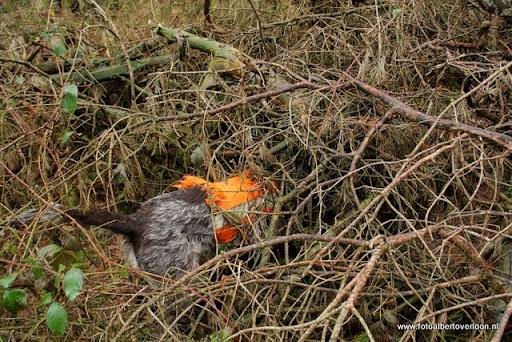 vossenjacht in de Bossen van overloon 18-02-2012 (57).JPG