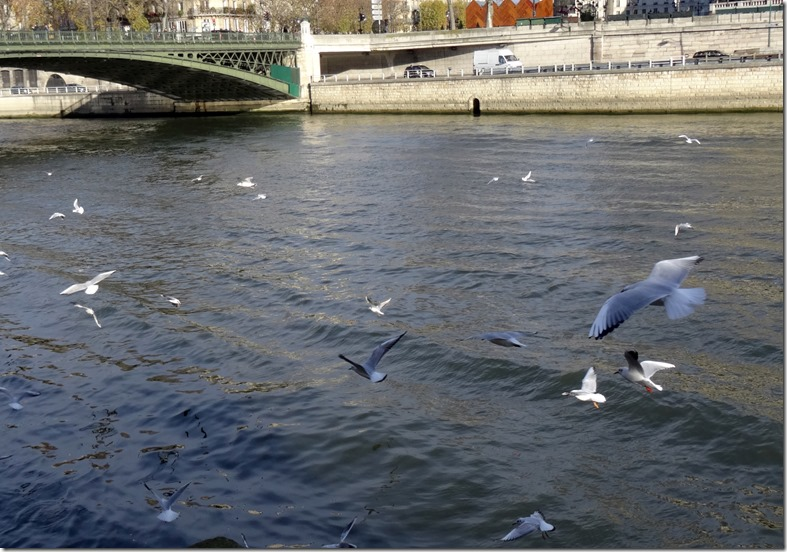 paris terns on the seine 112115 00001