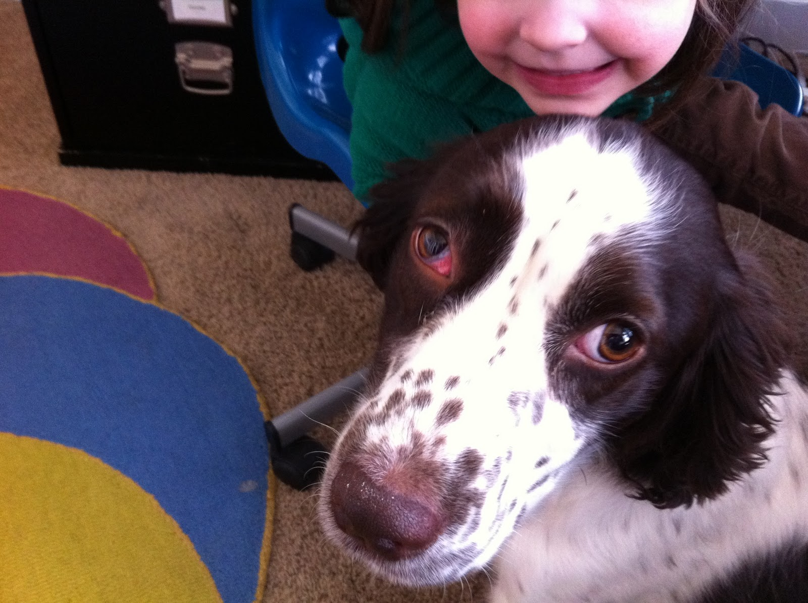 Can Dogs Get Conjunctivitis In One Eye