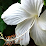 Hawaiian Leis Alpacas's profile photo