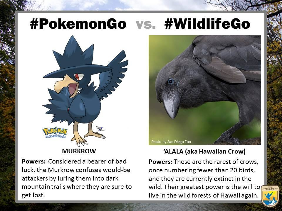 pokemongo-vs-wildlifego-11