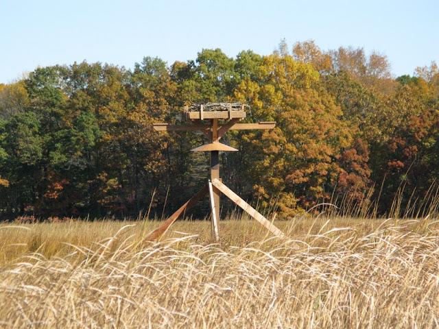 Guilford Salt Meadow Sanctuary Osprey Platform - sfs%252C10-25-09%2Bosprey%2Bplatform%2Binstall%252C142.JPG