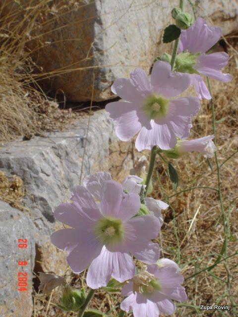 ANTALIA 2004. - 2 - DSC04196.JPG