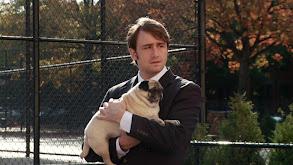 Dog Mayor thumbnail
