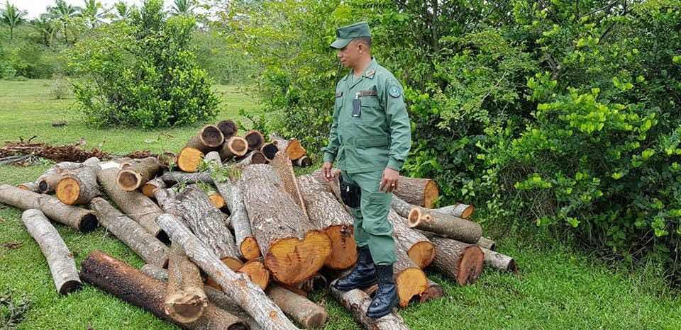 Medio Ambiente incauta madera, carbón y desmantela horno