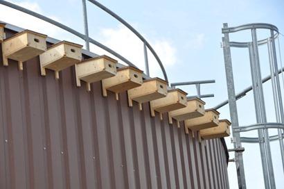 Mauersegler auf Biogasanlagen_web