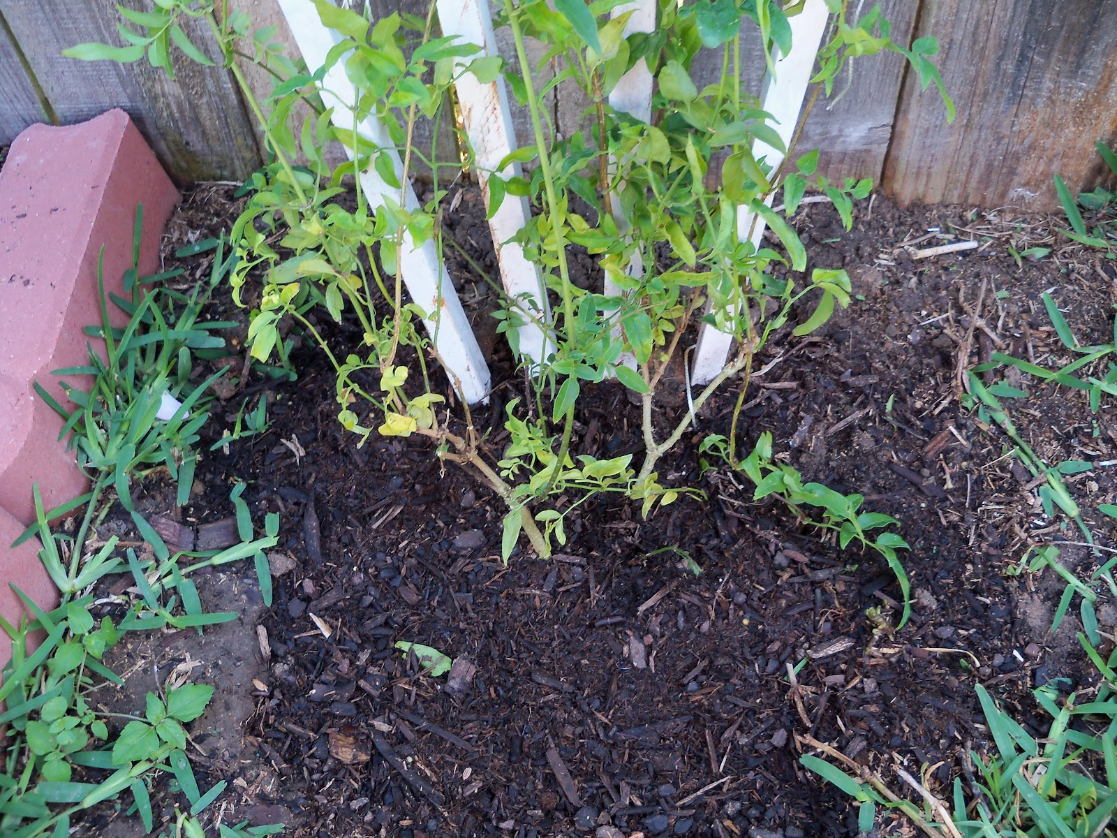Gardening 2010 - 101_1245.JPG