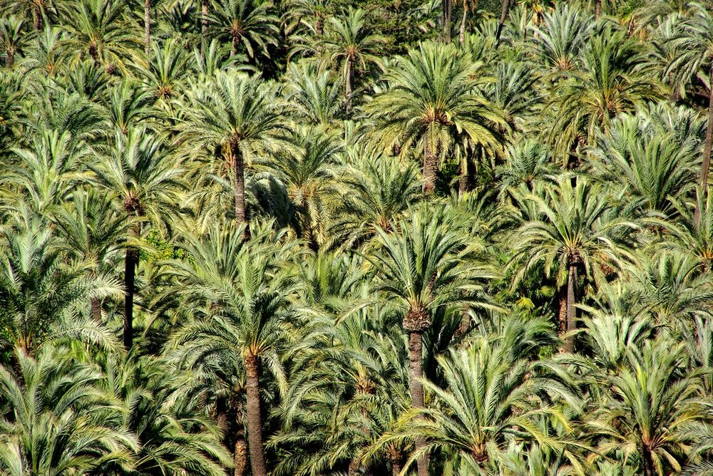 Elche, The City of Palm Trees