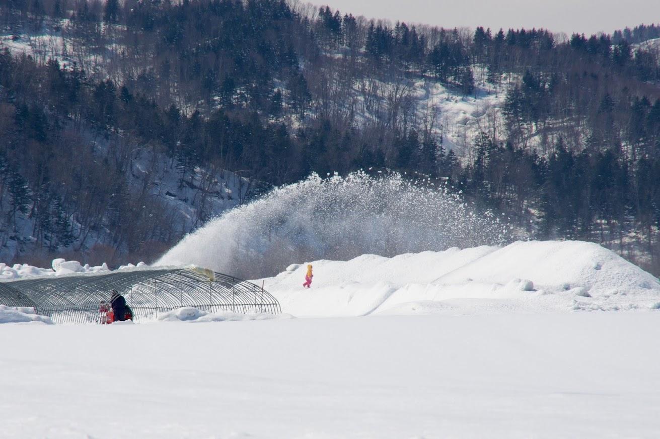 苗床の除雪作業