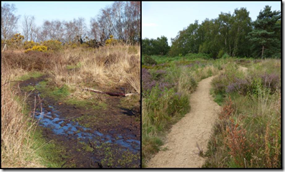 New path at Cleaver Heath (before and after)