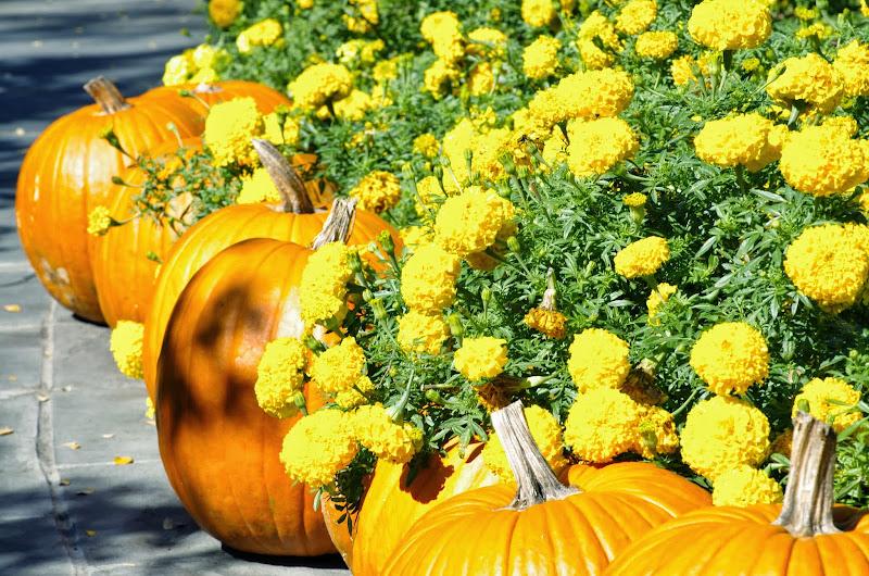10-26-14 Dallas Arboretum - _IGP4296.JPG