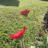 Gardening 2012 - IMG_3165.JPG