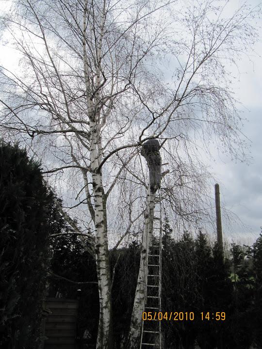 bomen snoeien en kappen - 068.JPG