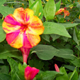 Gardening 2014 - 116_1960.JPG