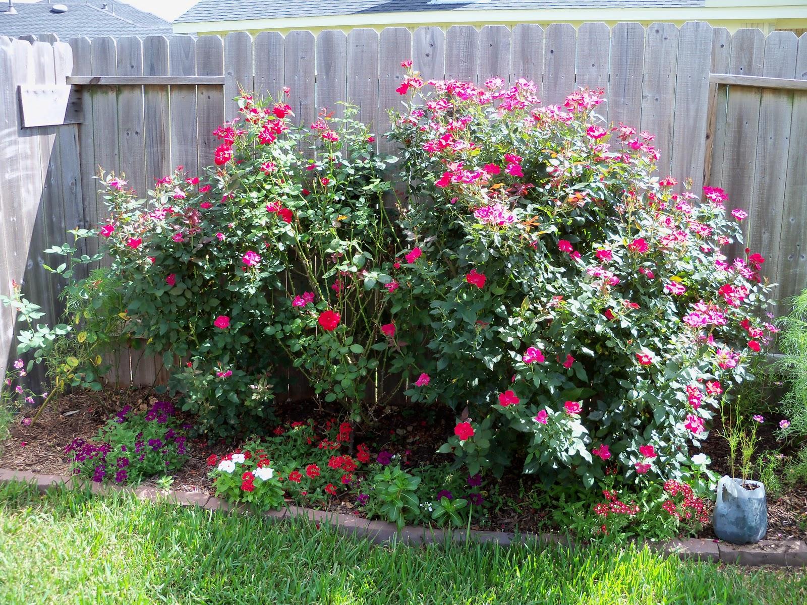 Gardening 2010, Part Three - 101_3827.JPG