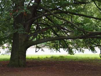 Pohon Yang Tunduk Atas Perintah Rasulullah Saw
