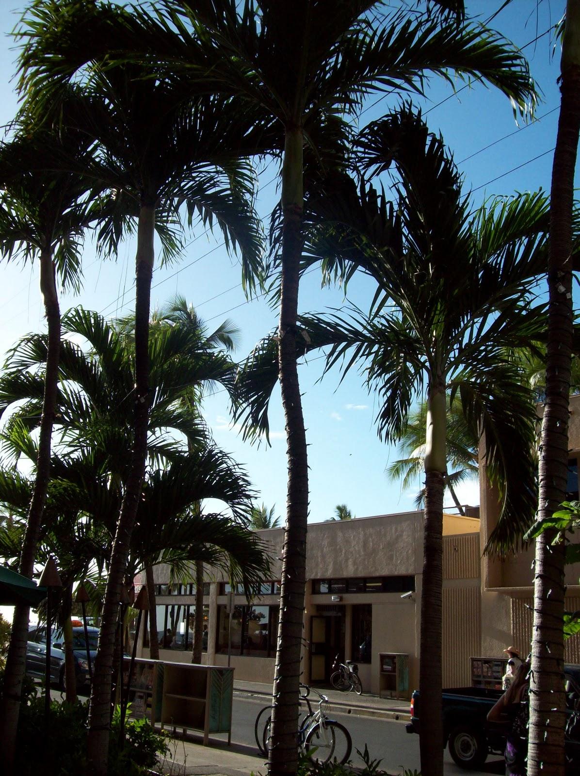 Hawaii Day 3 - 114_1136.JPG