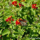 10-26-14 Dallas Arboretum - _IGP4325.JPG