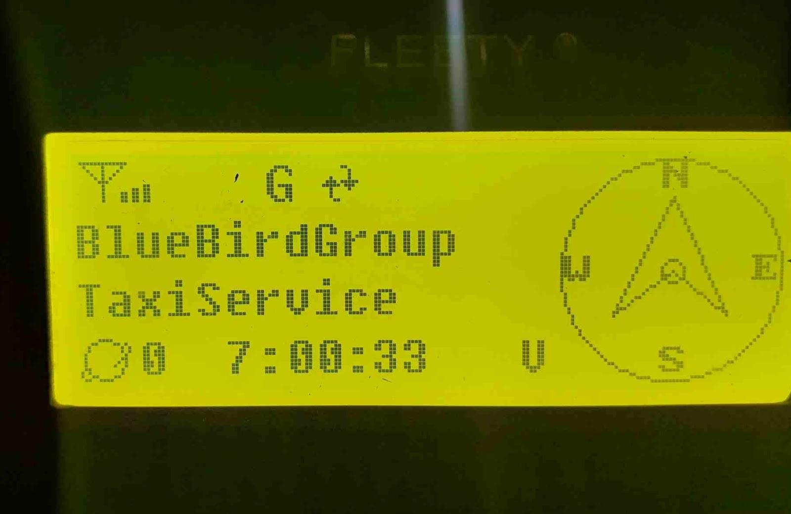 Fletty blue bird