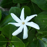 Hawaii Day 6 - 114_1713.JPG