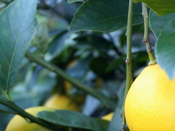 RECIPE: Easy Lemon Butter