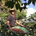Feira Sabores da Terra oferece produtos a partir de R$ 8,00