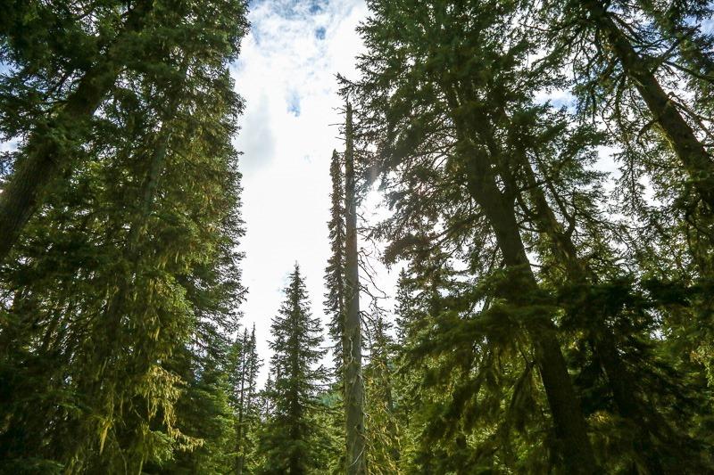 revett lake trail-13