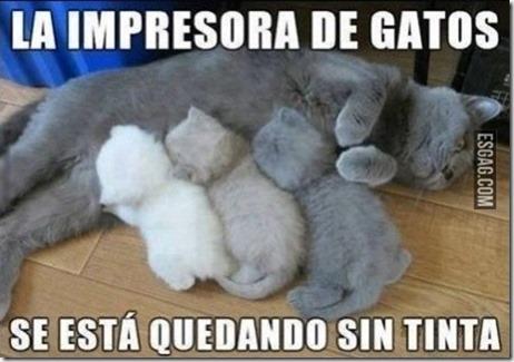 humor gatos (4)